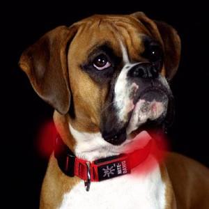 NITE IZE - Innovative Accessories - NI-NND-03 - Nite Dog - L.E.D. Dog Collar