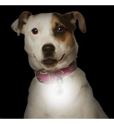 NITE IZE - Innovative Accessories - NI-PCL-03-10 - PetLit LED Collar Light